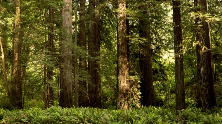Wallpapers California USA Redwood National State Parks 3840x2160