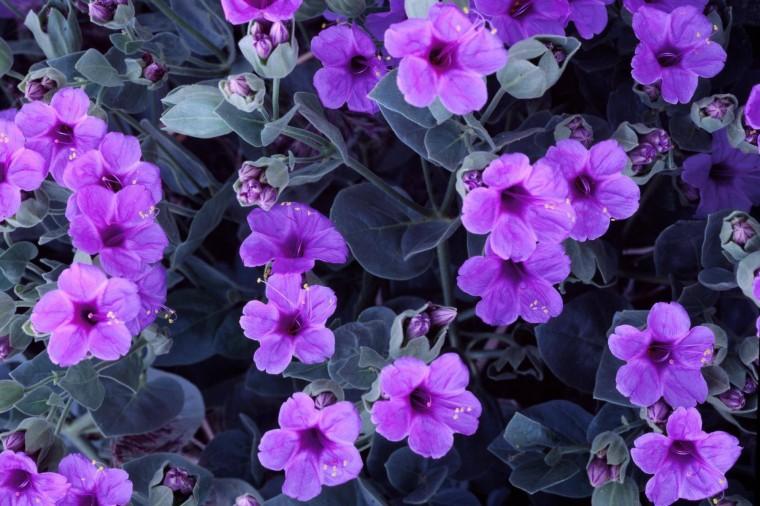 purple cute flowers wallpaper   pink and purple Wallpaper