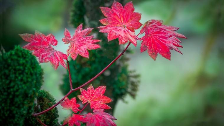 Pink leaves leavespinkcolourfulnatureforestdifferent