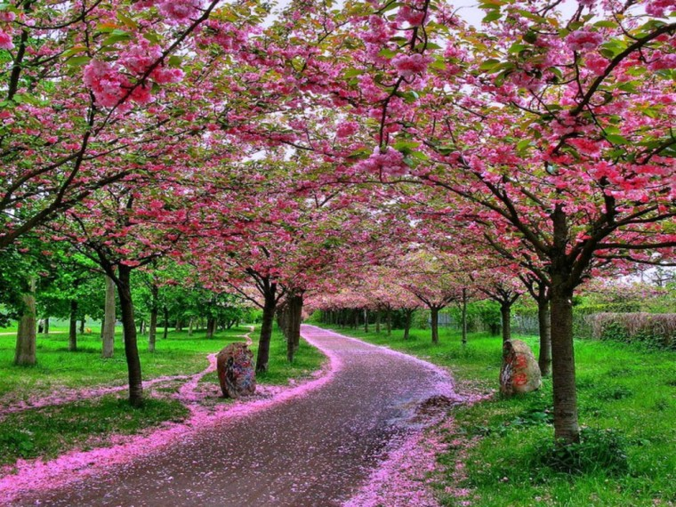 Nature Wallpapers Beautiful pictures Nice Wallpapers Nature