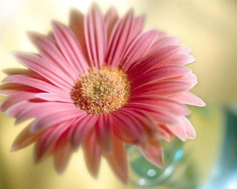 flowers for flower lovers Flowers wallpapers HD desktop Beautiful