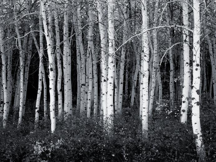 Black And White Forest Photography 40 black and white wallpapers