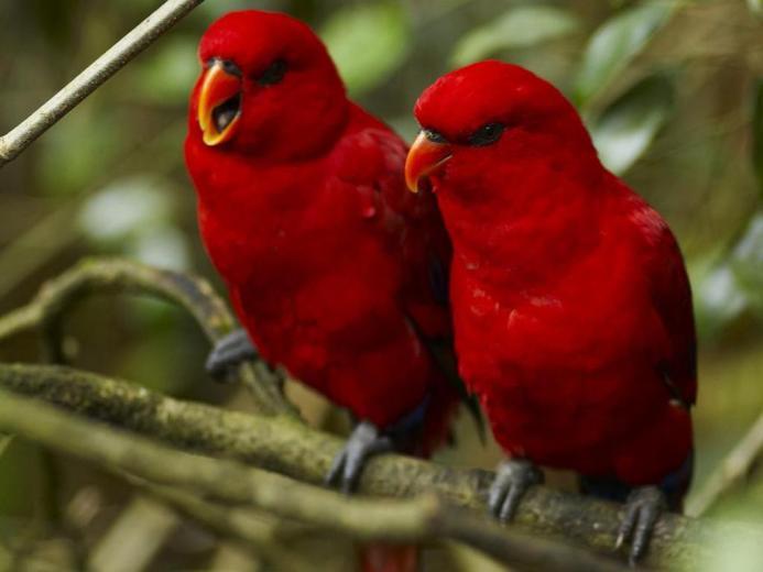 Wallpapers   HD Desktop Wallpapers Online Bird Wallpapers
