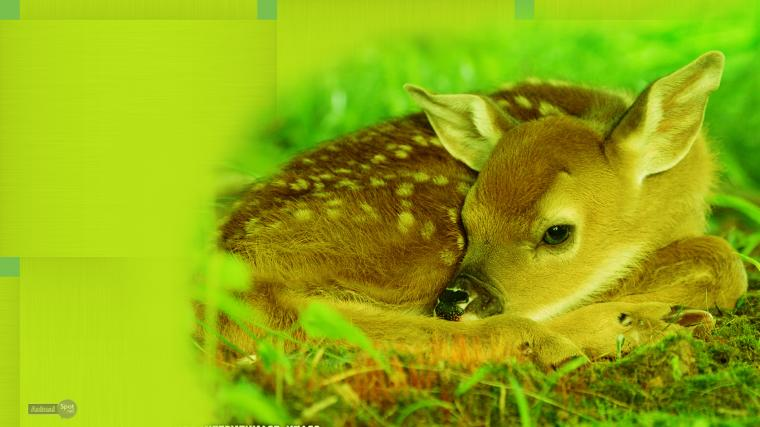 free deer wallpaper mule deer wallpaper wallpaper deer whitetail deer