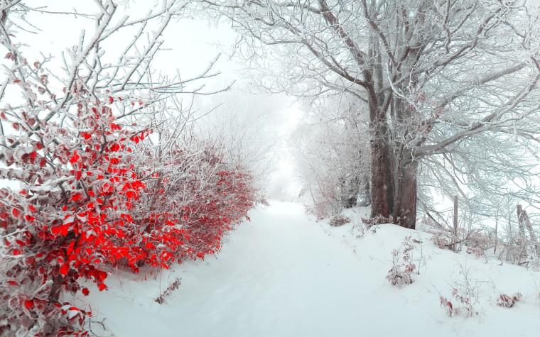 tree nature beautiful snow winter christmas f wallpaper background