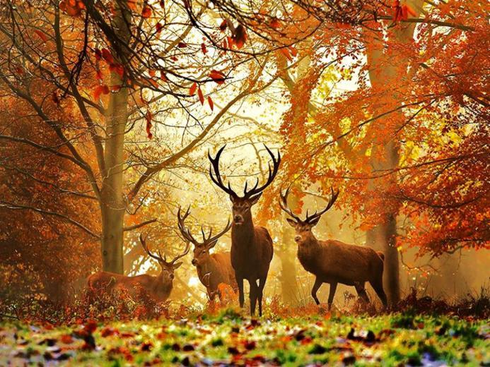 Wallpapers deer wallpapersdeer wallpaperwhitetail deer wallpaper