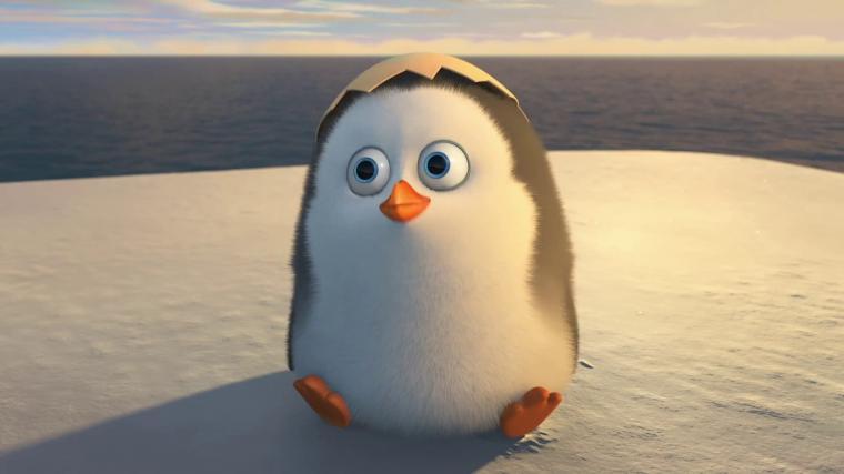 Pics Photos   Cute Penguin Wallpaper