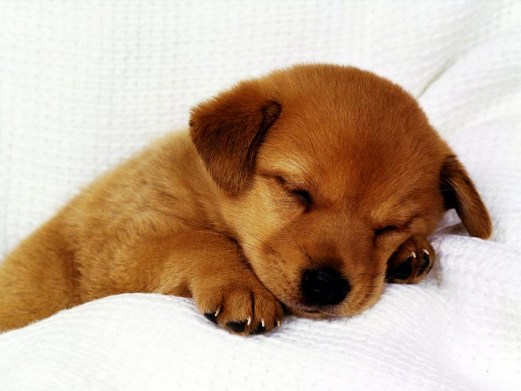 Hd Puppy Wallpaper Download Wallpaper