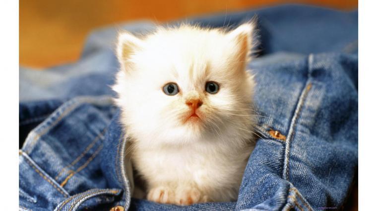 of cute cat baby beauty cute cat baby hd wallpaper wallpaper