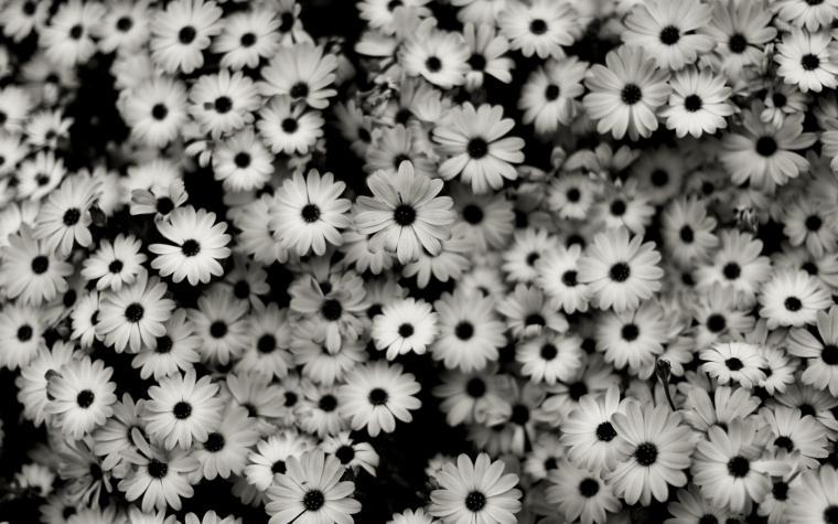 Black White 2 Jeu PC   Images vidos astuces et avis