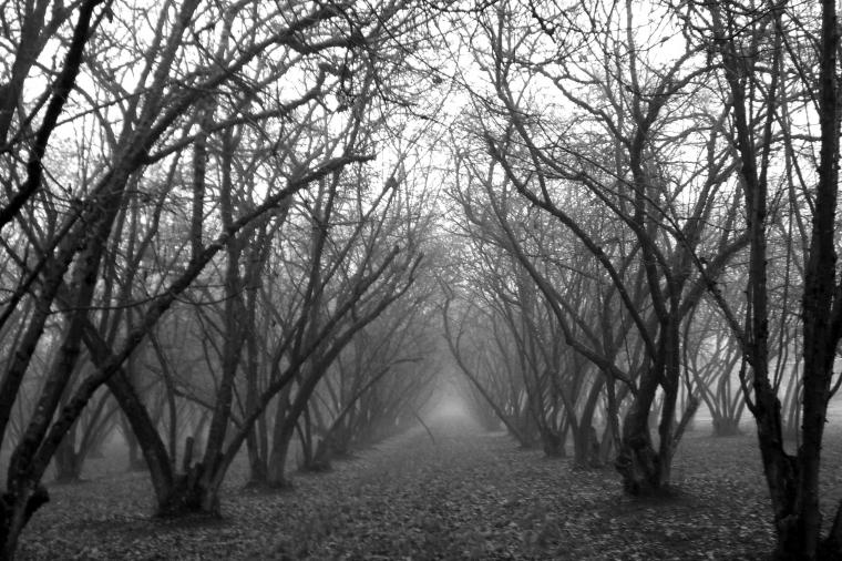Foggy Grove black and white by nick91884   Desktop Wallpaper