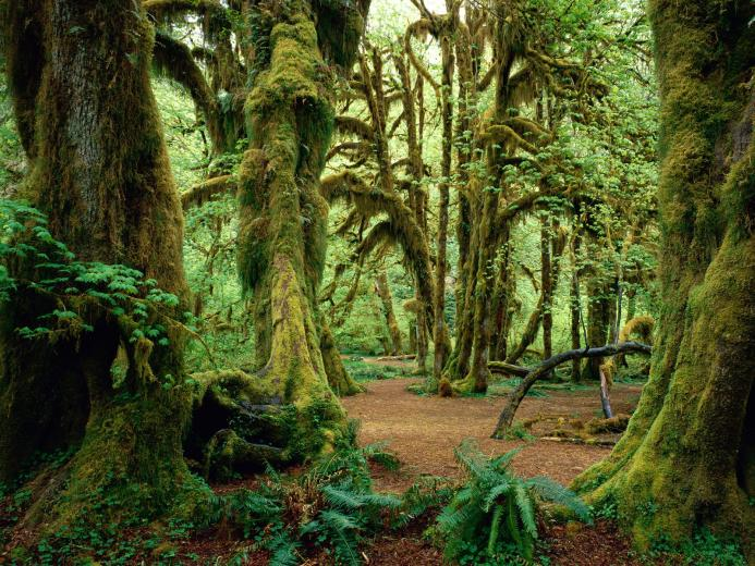 Wwe Wrestlers Profile Redwood National And State Parks Gallery
