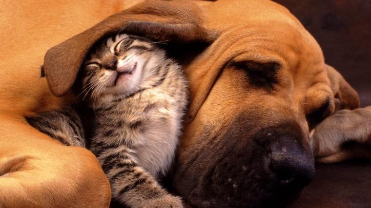 funny best friend animal hd wallpaper wallpapers55com   Best
