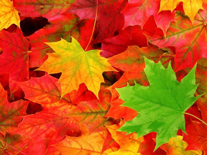 pemandangan Autumn Leaves Wallpaper