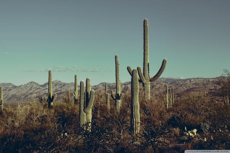 Saguaro National Park East Arizona 4K HD Desktop Wallpaper for