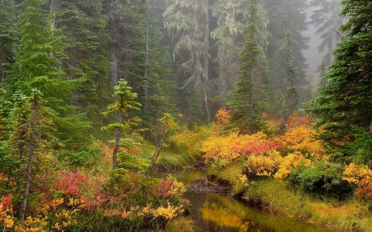 HQ Brook Mount Rainier National Park Wallpaper   HQ