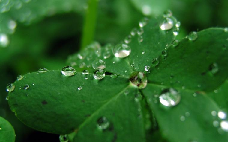Fresh Rain Drops Green Clover HD Wallpapers Epic Desktop Backgrounds