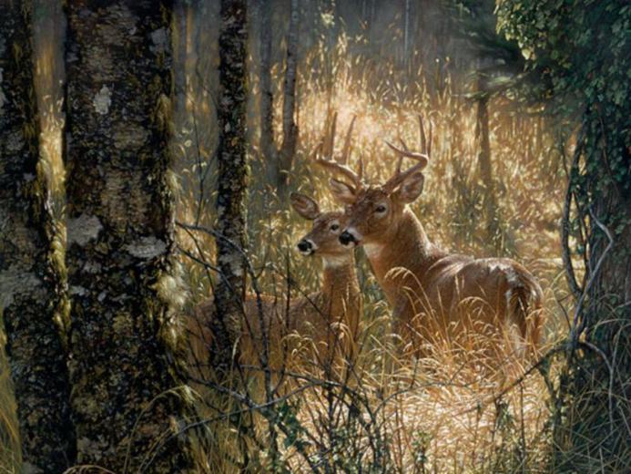 Deer Wallpaper For Iphone Download Wallpaper DaWallpaperz