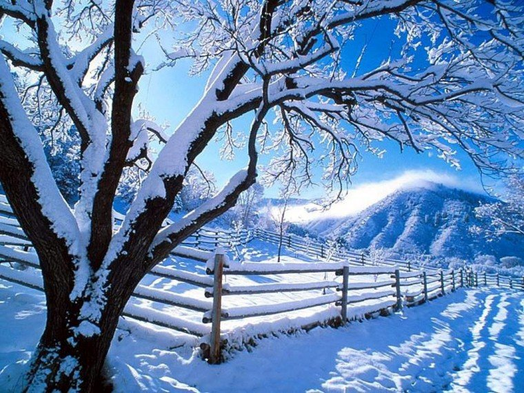 free winter scene wallpaper which is under the winter wallpapers