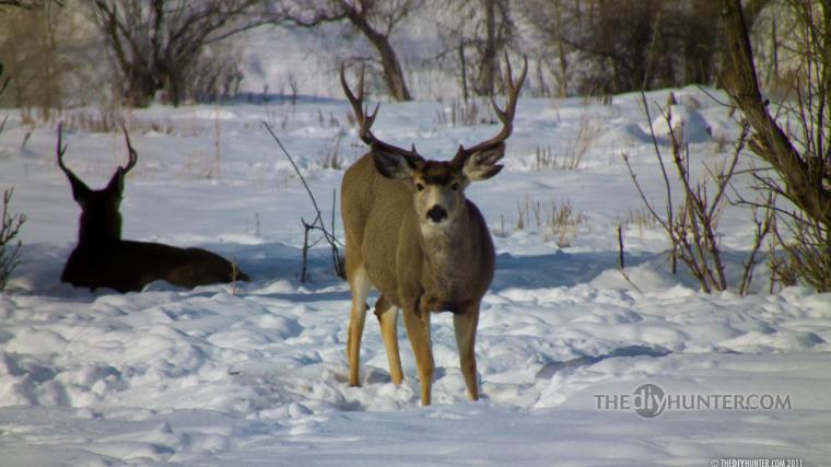 Hunting wallpaper   433617