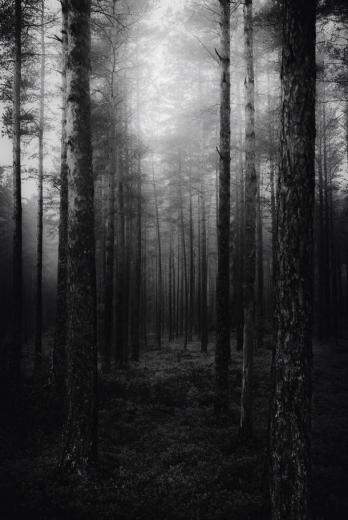 amazing awesome background black and white forest ghost grunge