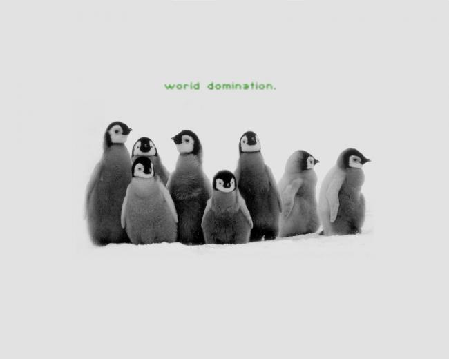 Penguin Wallpaper and Background Image 1600x1280 ID19528