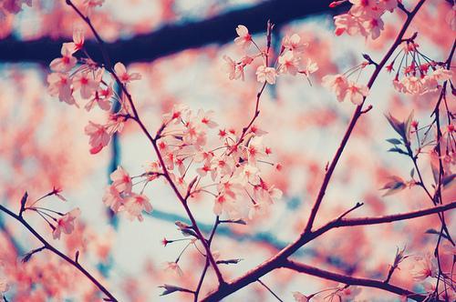 cerejeira on Tumblr