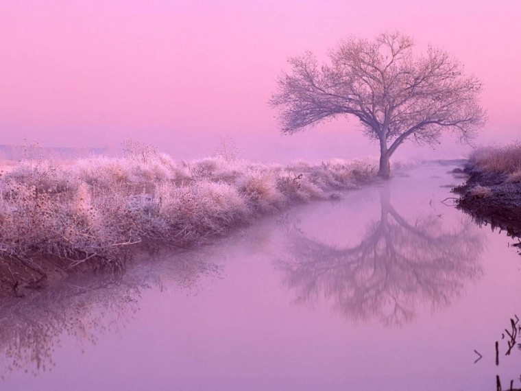 Pink nature   Nature Wallpaper