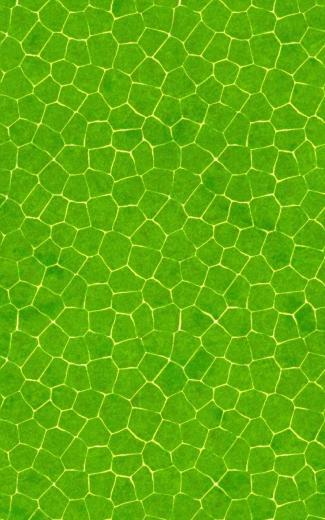 Crocodile skin pattern Mobile Wallpaper 4647