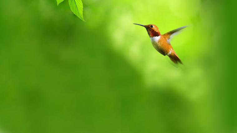 green Flying Birds Opera Web Browser Hummingbirds Opera