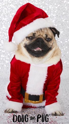 FREE Doug the Pug Christmas Wallpapers   ClairesBlog