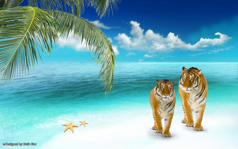 Beach HD Wallpaper Romantic   High Definition Wallpapers for Desktop
