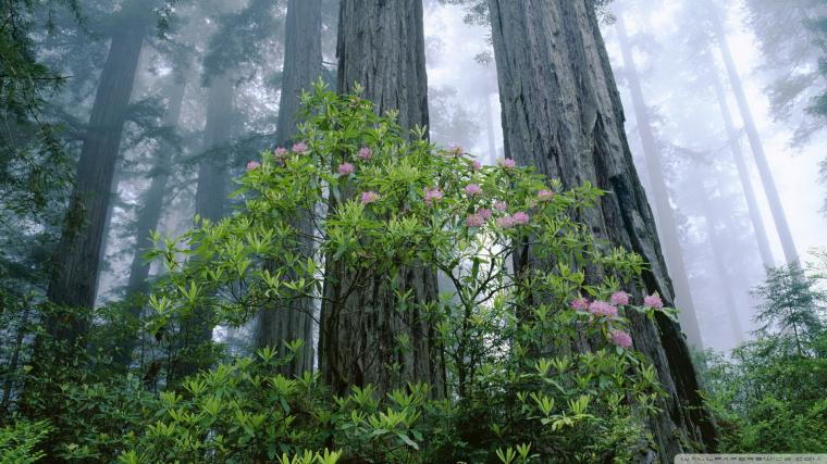 Redwood National Park 4K HD Desktop Wallpaper for 4K Ultra HD