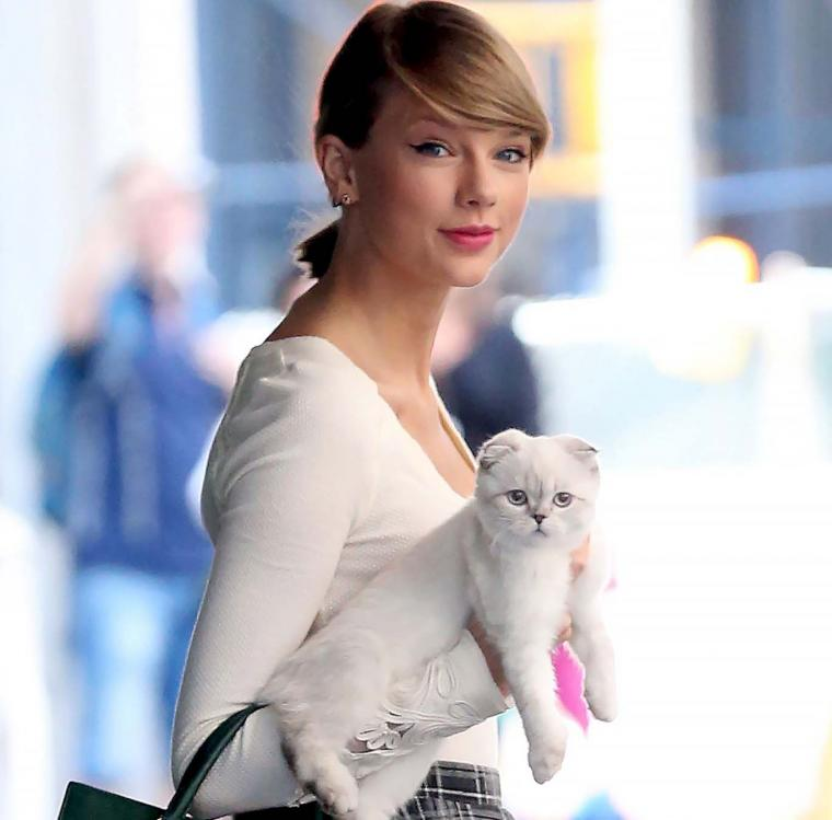 die taylor swifts cat - HD 1368×1350