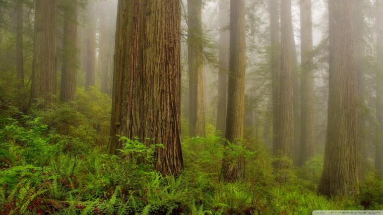 44] Redwoods Wallpaper on WallpaperSafari