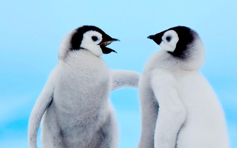 Cute Penguin Quotes QuotesGram