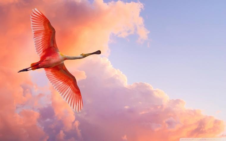 Beautiful Birds Flying 4K HD Desktop Wallpaper for 4K Ultra HD