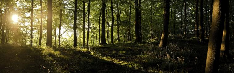 England forests sunlight United Kingdom panorama wallpaper background
