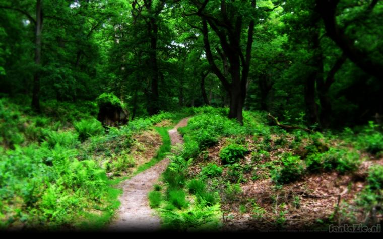 Fantasy wallpaper depth forest wallpapers images natuur 82782