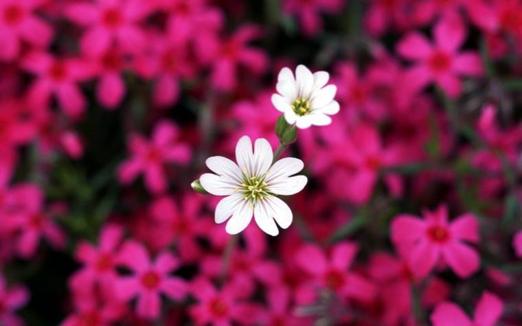 Pretty Little Flower HD wallpapers   Pretty Little Flower