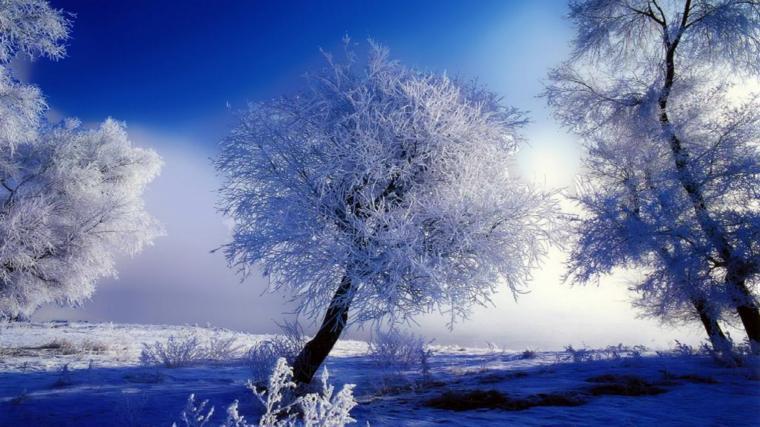 beautiful winter snow hd hd wallpaper HD Wallpapers