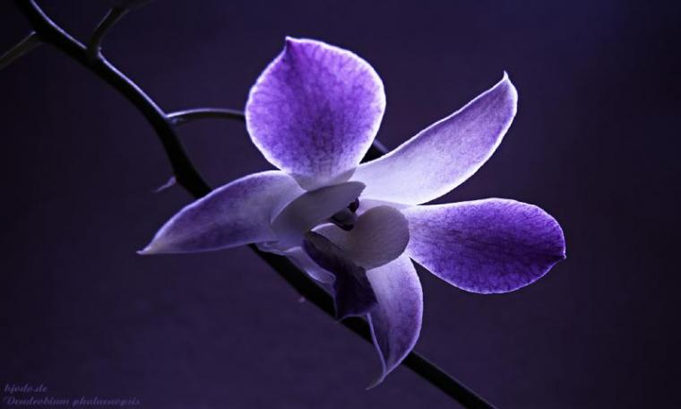 HD Wallpapers for all resolution HD 800x480 Flower Wallpapers