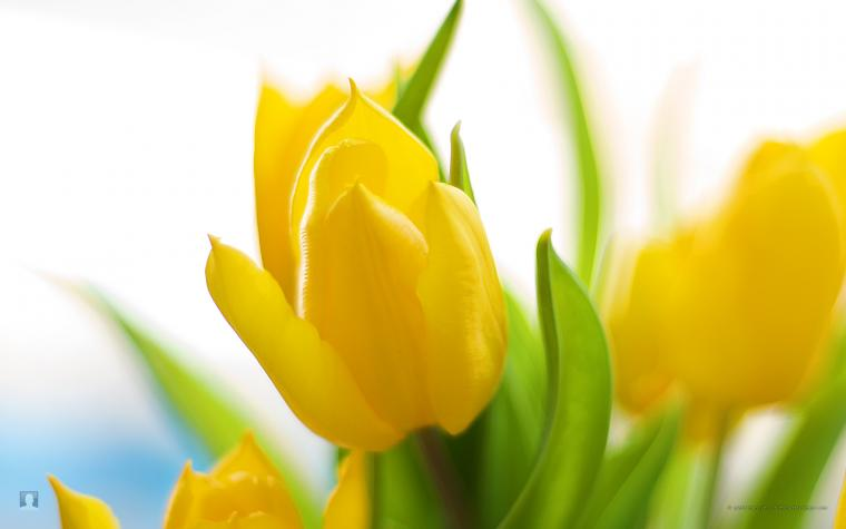 from spring flower desktop wallpaper wallpaper spring flower desktop