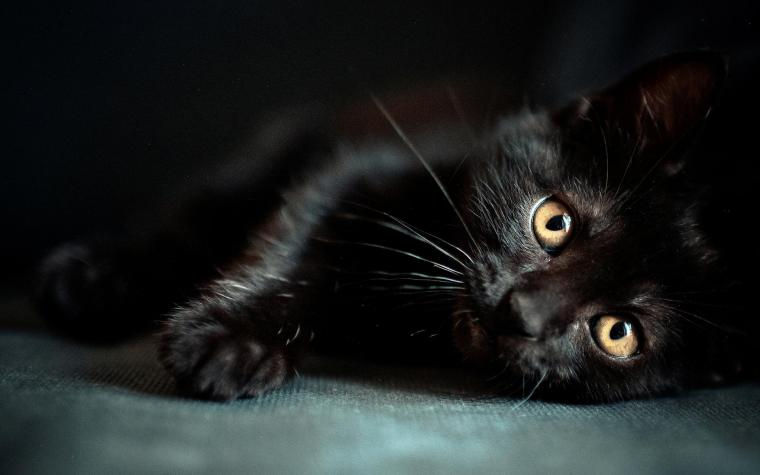 Black Cat Wallpapers   Top Black Cat Backgrounds