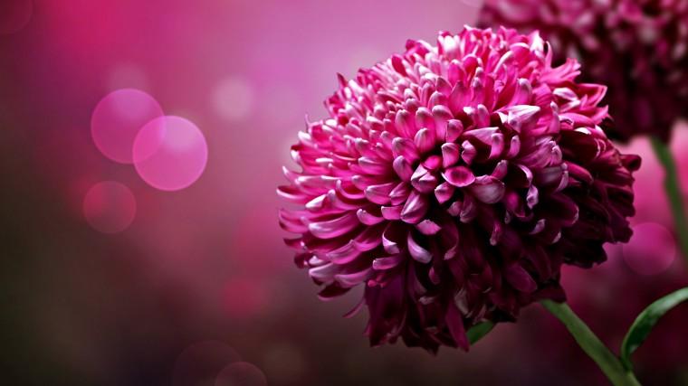 beautiful flower desktop wallpapers