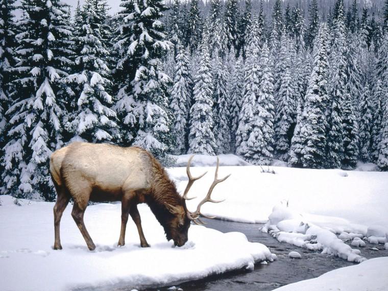 Winter Scenes Animal 1600x1200 Wallpapers 1600x1200 Wallpapers