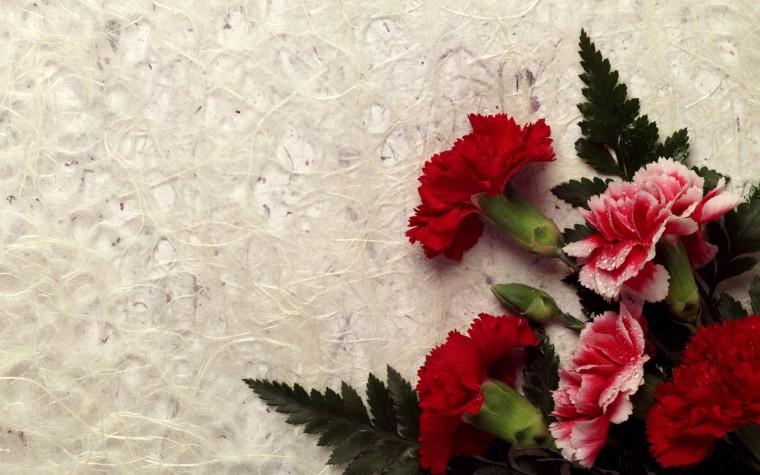 Most beautiful Flower lovers HD Wallpaper HD Wallpaper