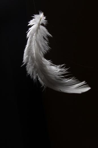 White Feather zwarte achtergrond 18003 achtergronden CamLib