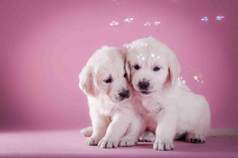Cute Puppy Backgrounds Android Apps on Google Play