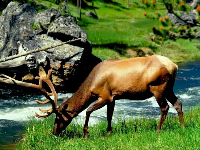 Animals Zoo Park Deer Photos   Deer Wallpapers For Desktop